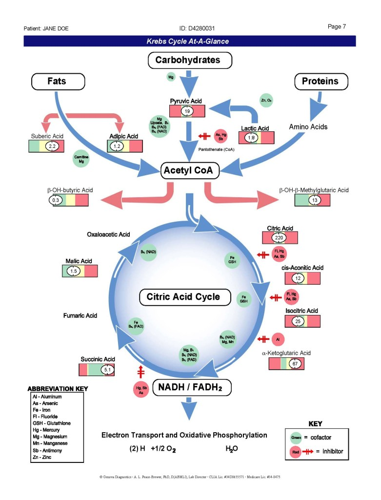 KREBS CYCLE LARGE