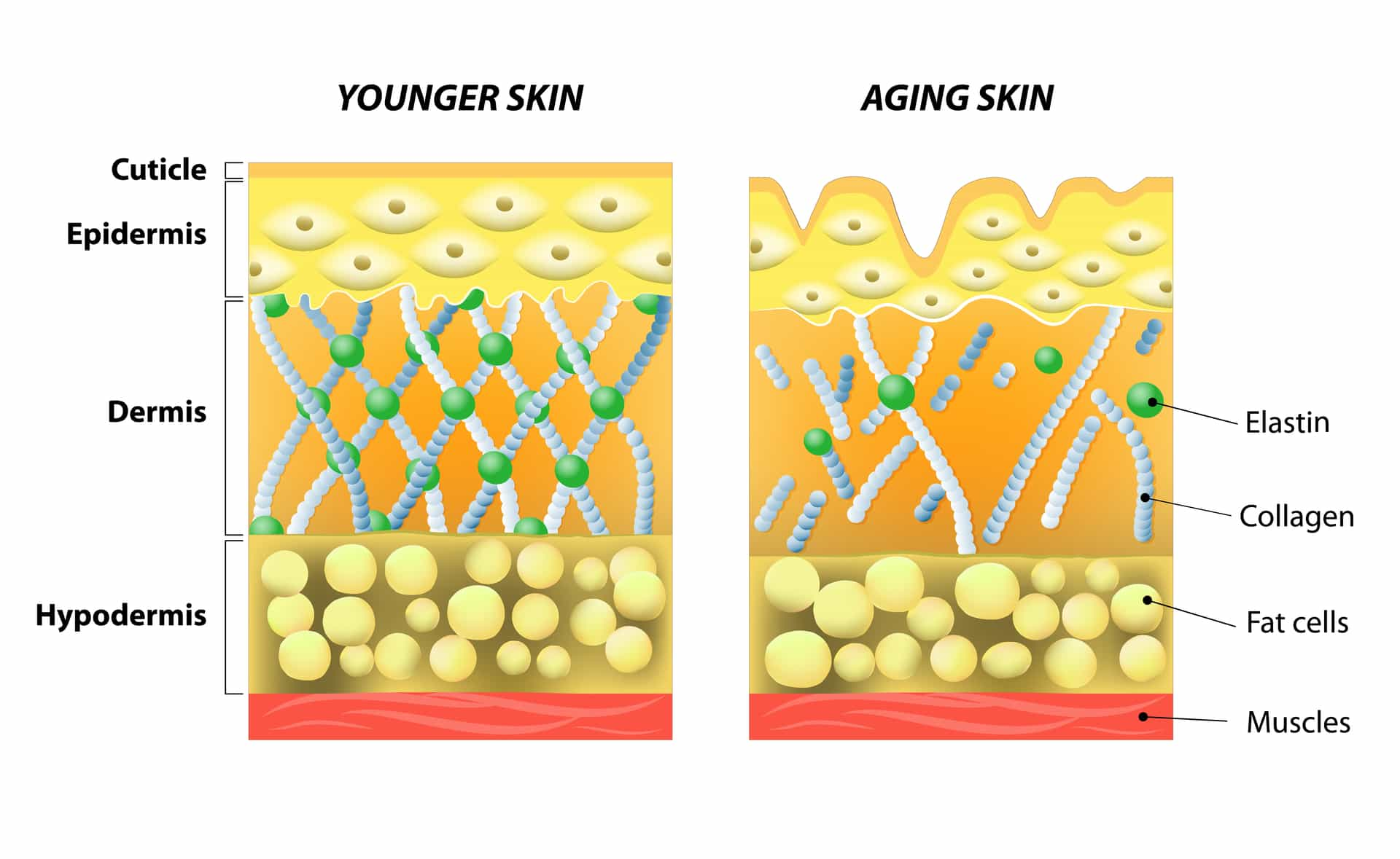 how to add collagen to your skin